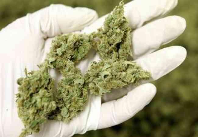 Cannabis terapeutica, mancano le scorte: lo Stato corre ai ripari